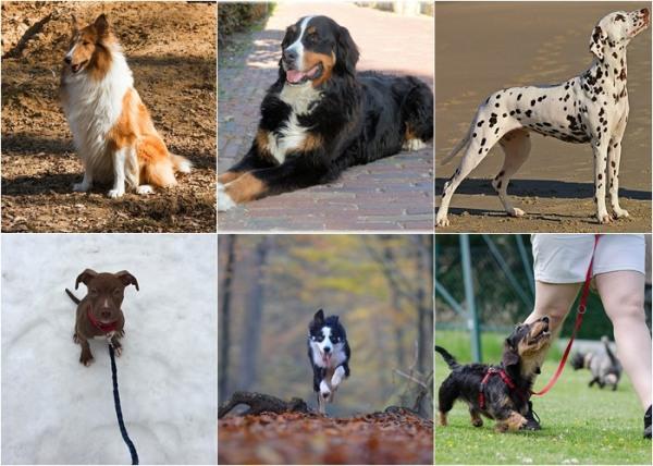 obediencia perro, obediencia perros, obediencia basica