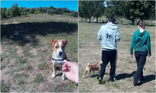cachorro, cachorros, como educar a tu cachorro